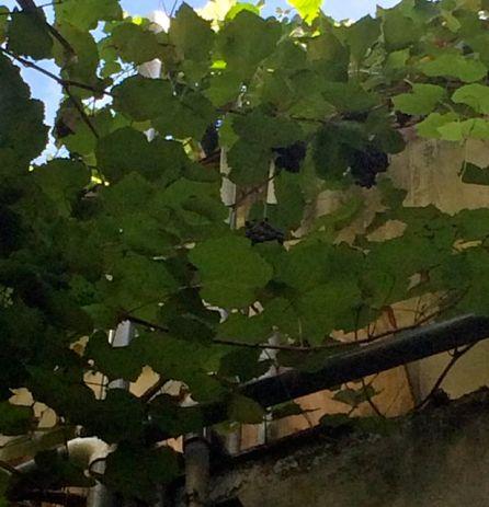 vigne à la gallery inn