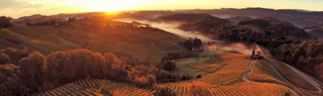 srce-med-vinogradi